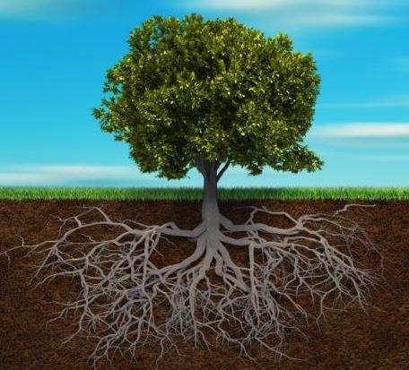 Deep Roots Aid Debug