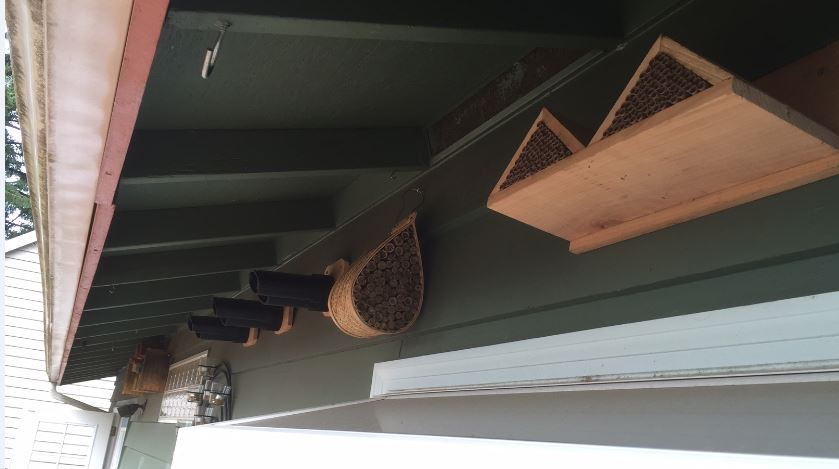 A row of our Mason Bee houses, some purchased, some built